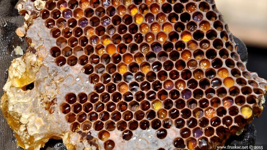 Life - Kad zazuje pčelinji orkestri: fruškogorski lipov med