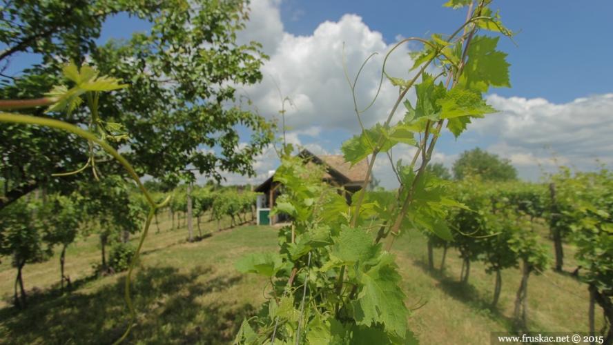 Weekend Breaks - Degustacija u najšarmantnijoj vinariji i kupanje na Dunavu