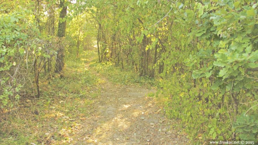 Springs - Parcovljev izvor