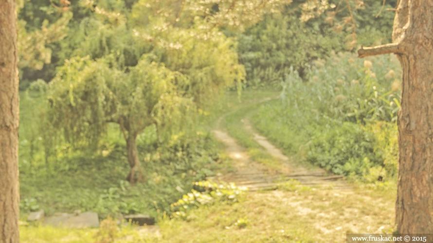 Springs - Jelica Spring